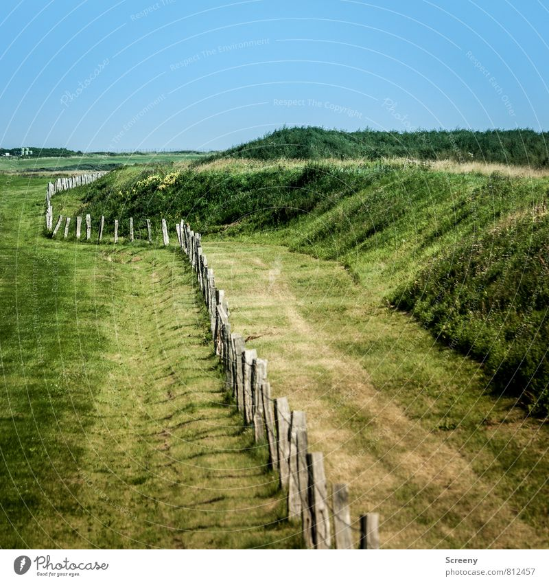 fenced Vacation & Travel Tourism Trip Summer Nature Landscape Animal Sky Cloudless sky Meadow Field Island Langeoog Dike Growth Hiking Blue Green Fence