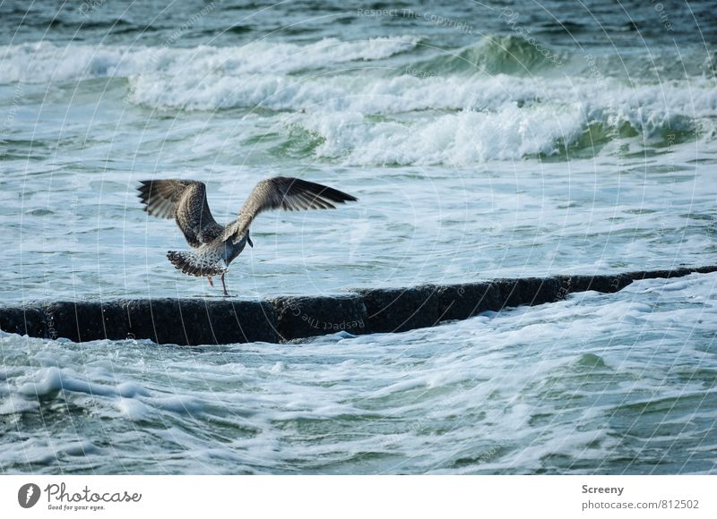 Moist socks Vacation & Travel Summer Ocean Island Waves Nature Landscape Water Coast Lakeside North Sea Norderney Animal Bird Seagull 1 Flying Stand Freedom