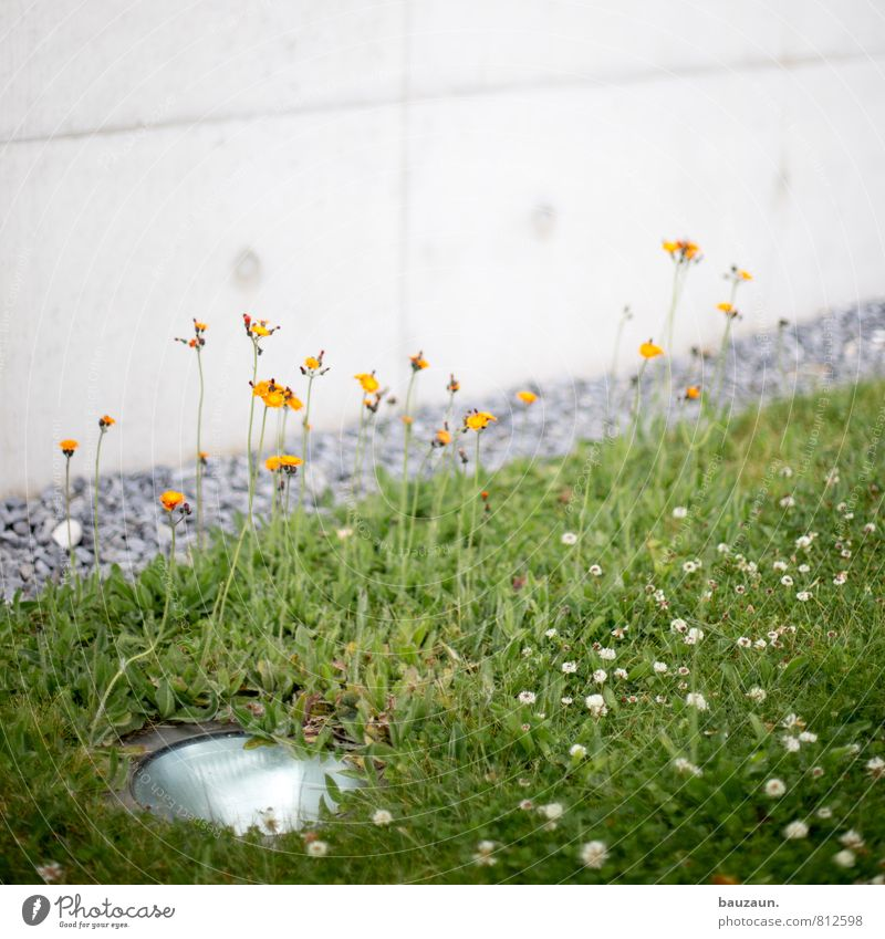 Nature Plant Green Flower House (Residential Structure) Joy Environment Wall (building) Meadow Grass Blossom Lighting Wall (barrier) Gray Lamp Line