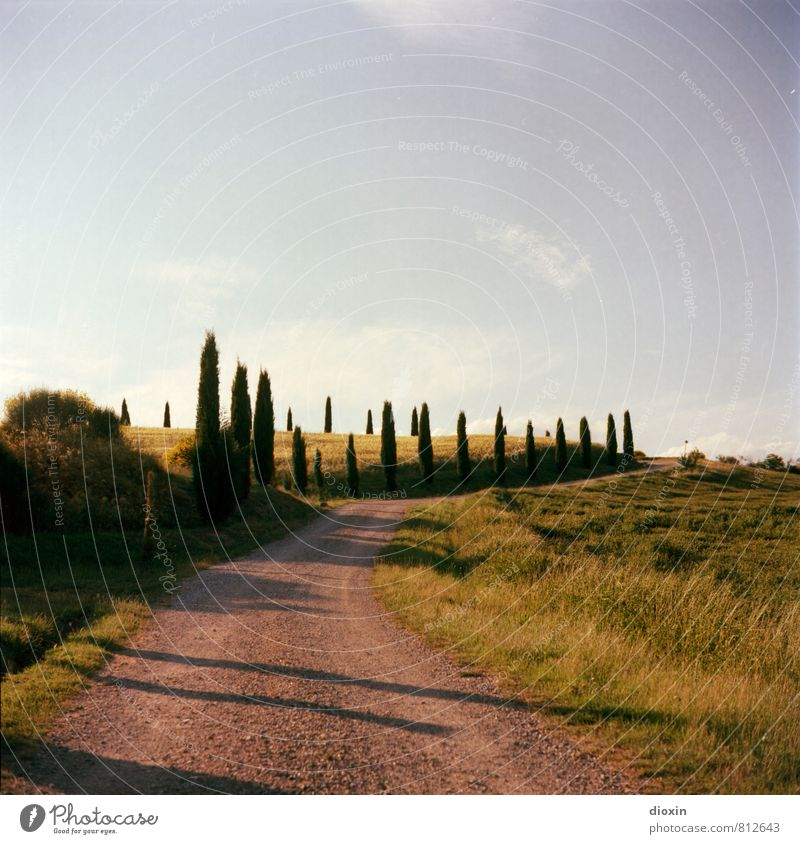 tuscany Vacation & Travel Tourism Summer Summer vacation Hiking Environment Nature Landscape Plant Sky Clouds Beautiful weather Warmth Tree Cypress Hill Tuscany