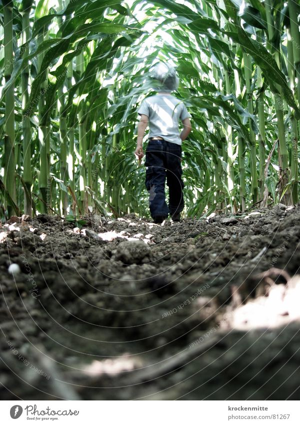 Child Green Boy (child) Lanes & trails Earth Dangerous Floor covering Creepy Brave Agriculture Toddler Cornfield Eerie Passage Ambiguous Maize