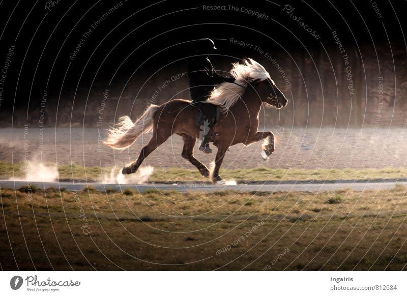 ghost rider Ride Human being Body 1 Nature Landscape Animal Farm animal Horse Iceland Pony Gait tölt Movement Action Horse's gait Speed Walking Illuminate