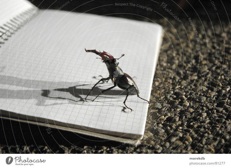fight Stag beetle Attack Night Dark Block Piece of paper Floodlight Fight Street Shadow