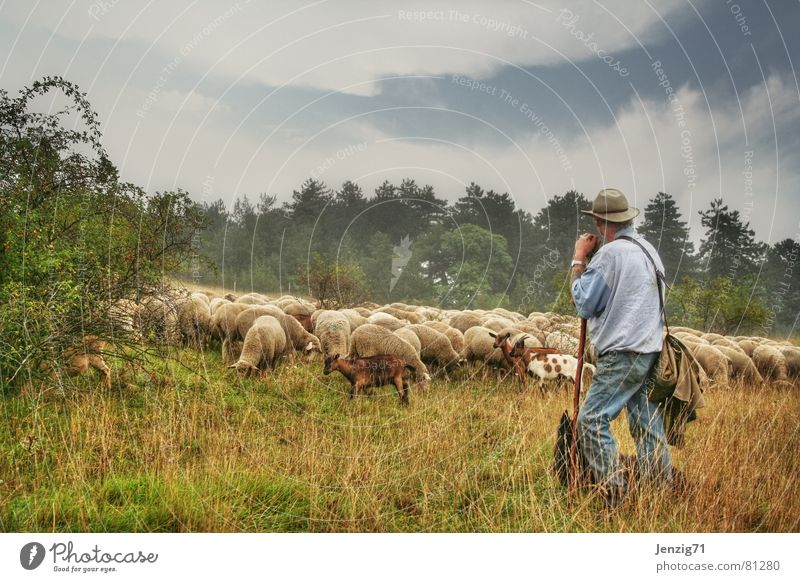 Dog Meadow Grass Work and employment Observe Pelt Agriculture Pasture Sheep Kid (Goat) Wool Farm animal Alpine pasture Pack Goats Guard