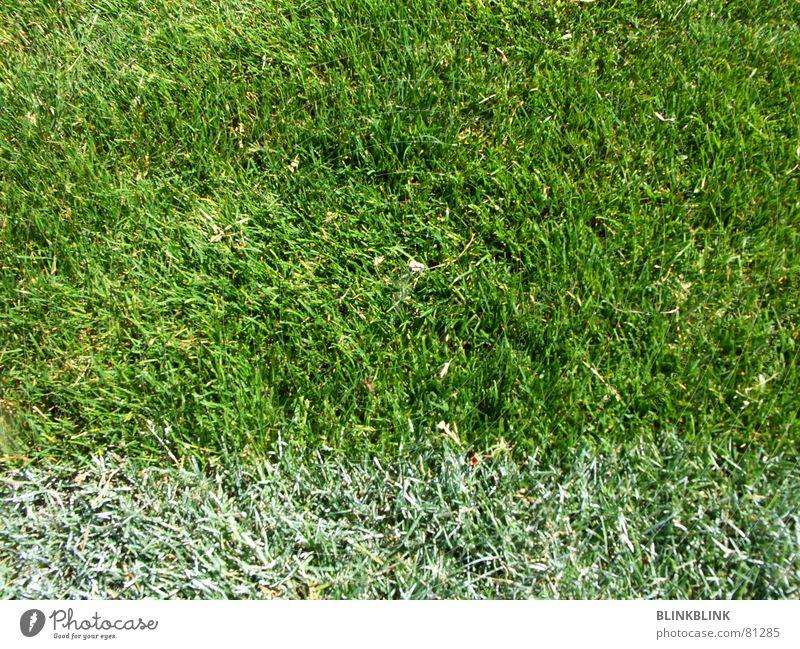 White Green Summer Joy Sports Meadow Playing Grass Line Soccer Ball Fan Football pitch