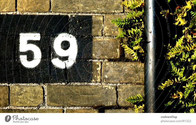 fifty-nine Brick Norfolk Wall (building) Far-off places England Great Yarmouth Digits and numbers Detail Communicate drainpipe drain pipe Pteridopsida bricks