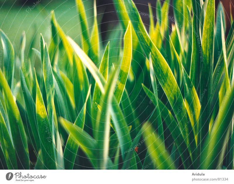 Nature Green Summer Calm Garden Dream Park Lighting Radiation Sunbathing Smooth Lily Flare Beam of light