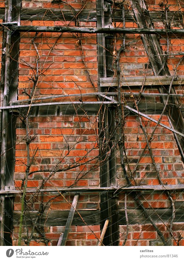 Old Red Vine Transience Brick Shriveled Berries Dried Limp Wine growing Half-timbered facade Cordon Enology