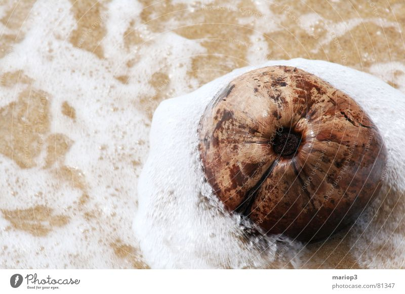 Coconut in the sea Asia Wet Damp Ocean Thailand Indian Ocean Beach White crest Recklessness Exterior shot Bathing place Coast Fruit Water Sand beach sb.