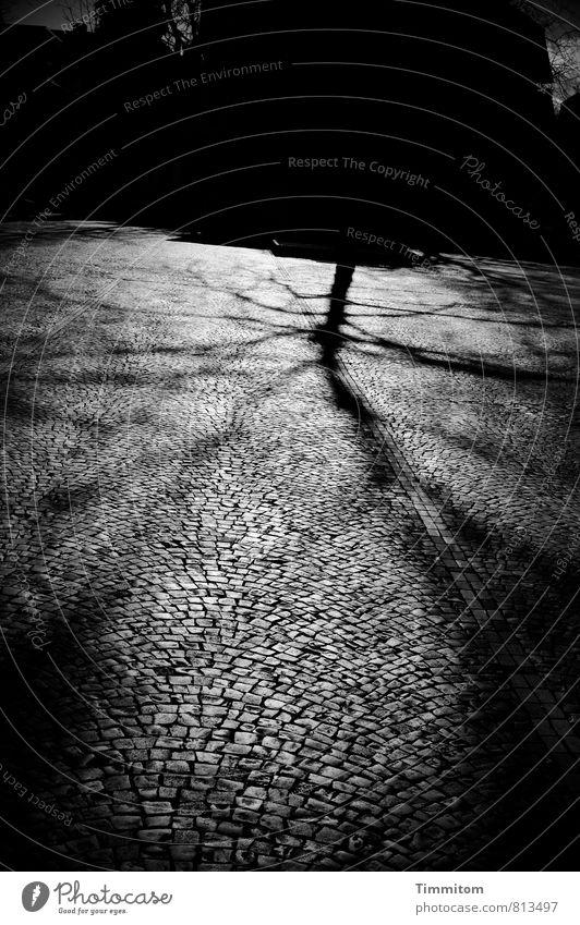 Tree Black Dark Emotions Gray Stone Line Esthetic Places Threat Simple Paving stone Heidelberg