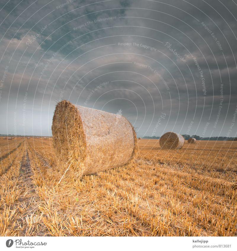 Sky Nature Plant Landscape Animal Environment Horizon Weather Field Success Climate Future 3 Round Agriculture Grain