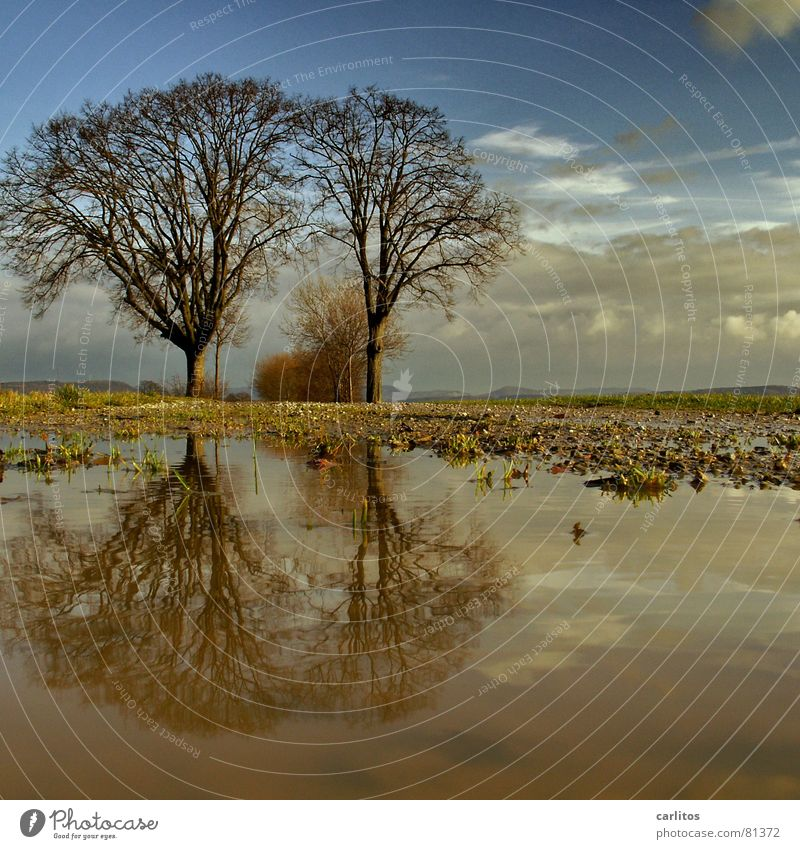 Tintin and Struppi Horizon Tree 2 Footpath Puddle Reflection Clouds Dramatic Wind Passion Middle Symmetry White balance Tree trunk Tree structure Portal