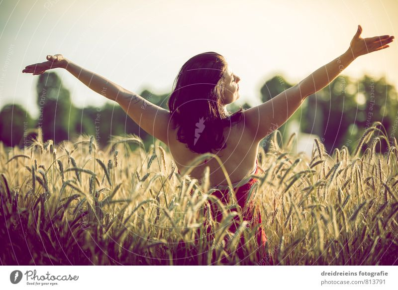 Sunset in the cornfield Human being Feminine Woman Adults 1 Environment Nature Sunrise Sunlight Summer Beautiful weather Field Black-haired Brunette Long-haired