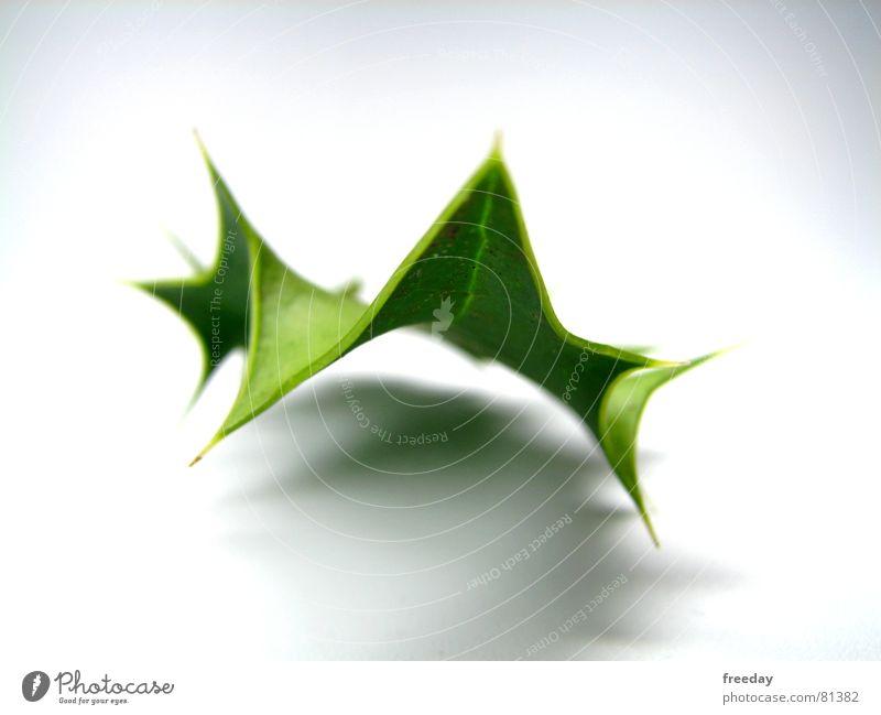 ::: Rockendesportblatt ::: Triangle Green Thorny Unique specimen Light Tree Photosynthesis Environment Deities Pattern Bright green Zigzag Bushes Easygoing
