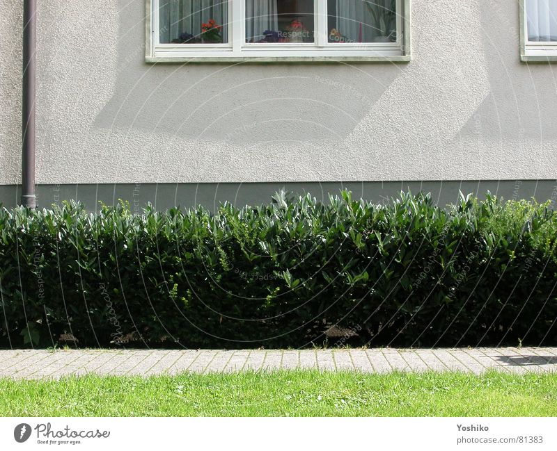 Green Wall (building) Window Grass Garden Park Lawn Bushes Hedge Herbaceous plants Window board Rain gutter Green space