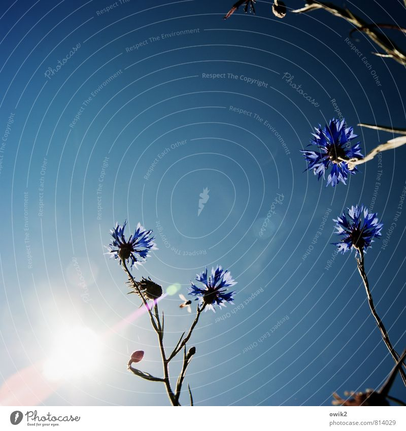 Nature Blue Plant White Flower Landscape Environment Movement Blossom Natural Bright Air Glittering Together Growth Idyll