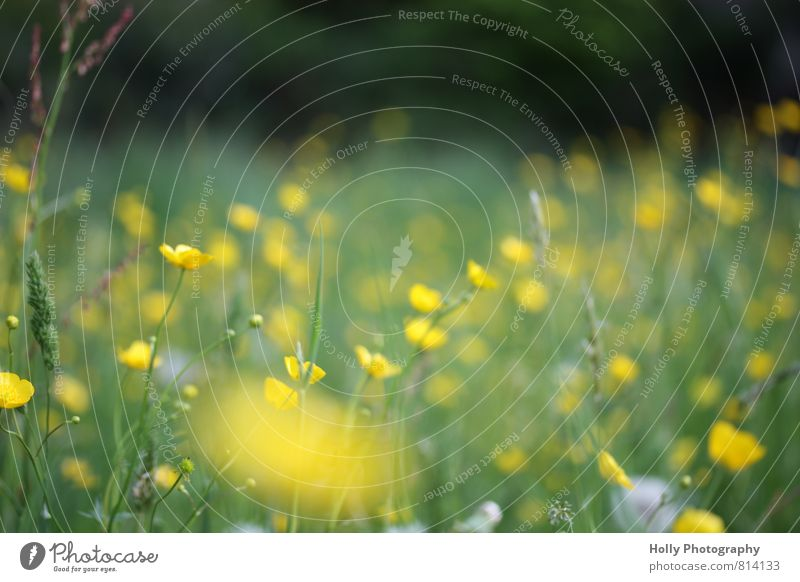 flower meadow Environment Nature Landscape Plant Spring Flower Grass Bushes Blossom Foliage plant Wild plant Meadow Touch Feeding To enjoy Looking Hiking