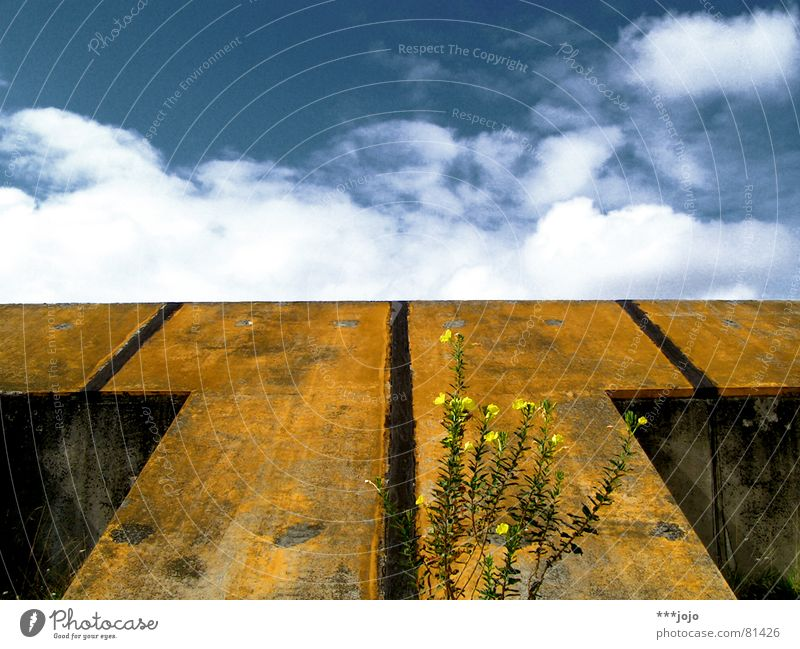 Sky Flower Blue Plant Clouds Yellow Concrete France Converse Symmetry Ramp Oenothera