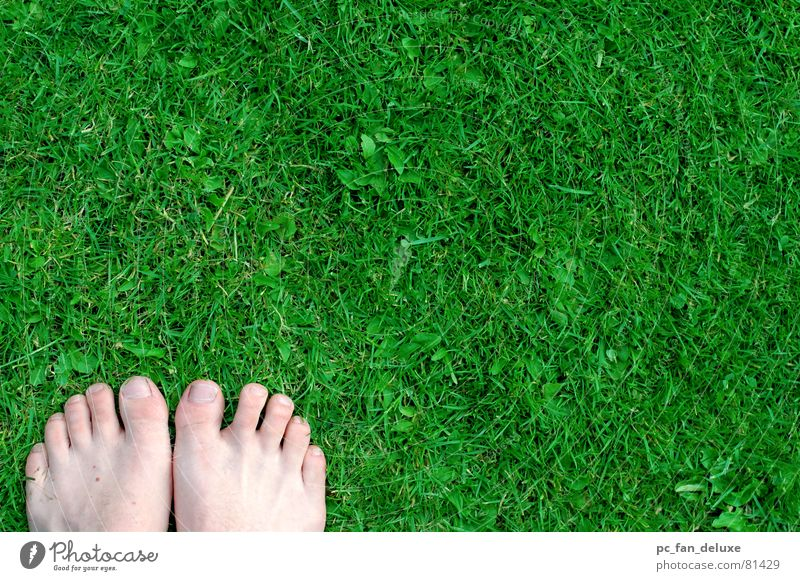 Green Grass Feet Lawn Toes Stride