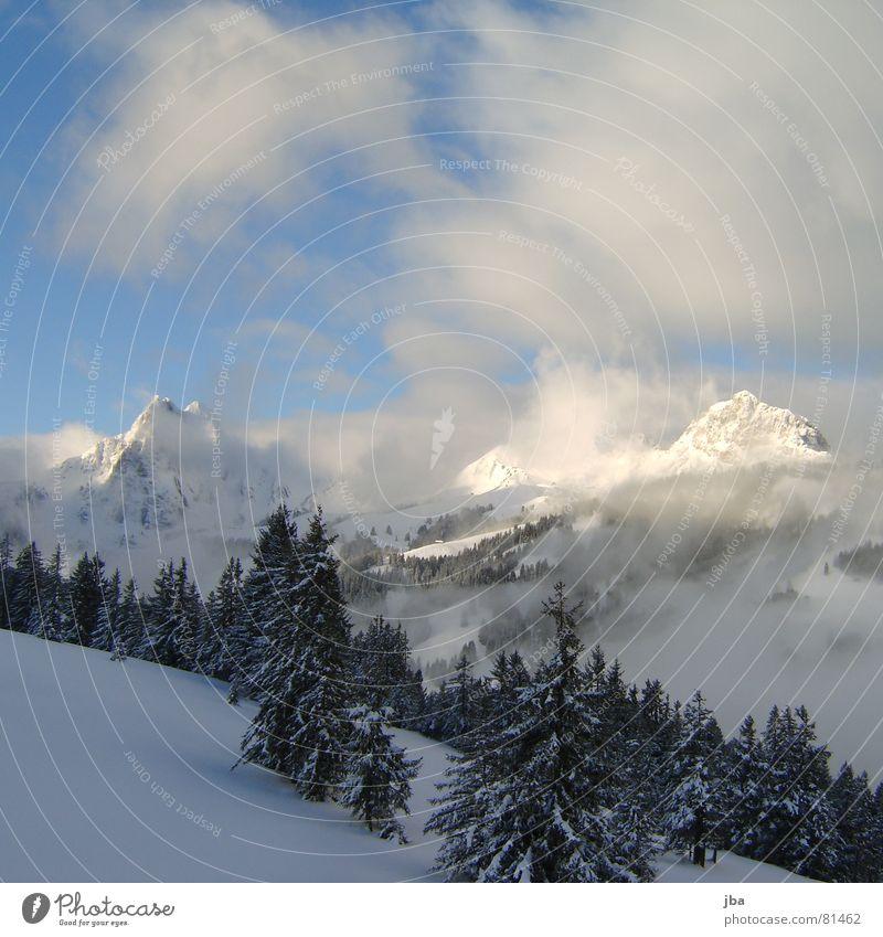 Sky Blue Joy Clouds Forest Snow Mountain Fog Point Branch Alps Fir tree Powder Mountain range Coniferous forest Virgin snow