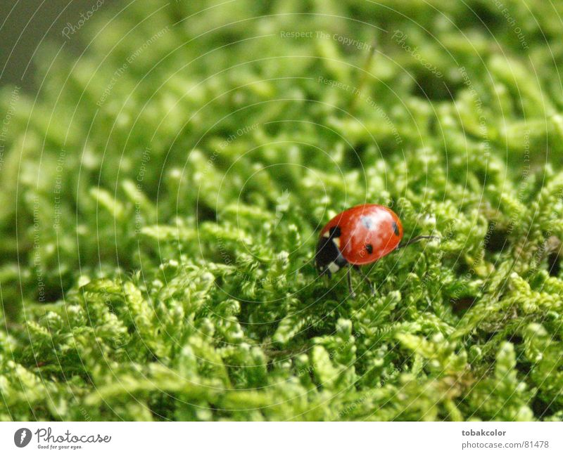 ladybug Close-up Ladybird Macro (Extreme close-up) Insect Contrast mossy green Nature