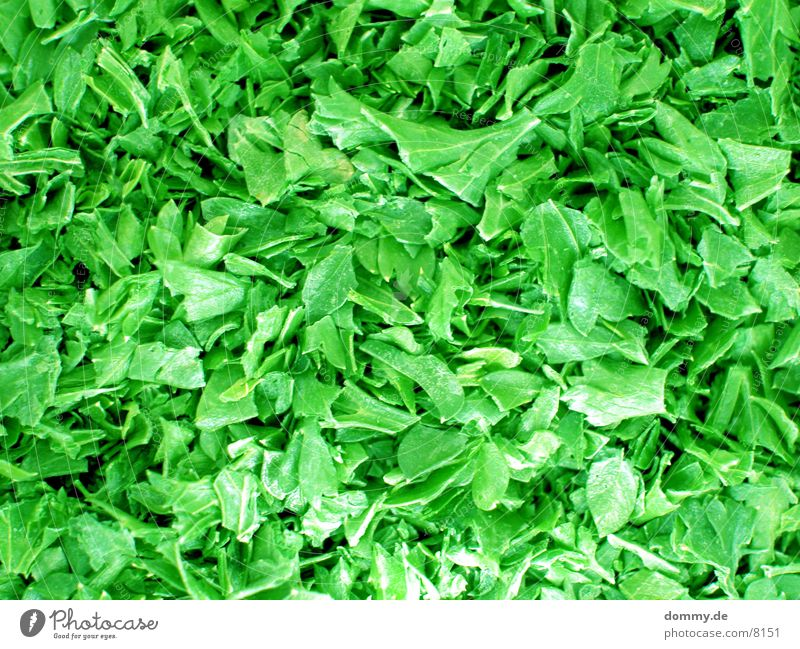 Green Leaf Healthy Herbs and spices Parsley
