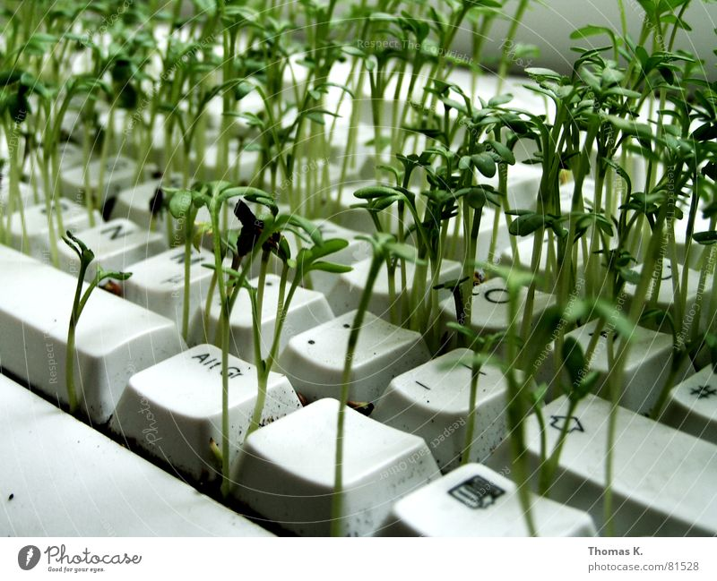 Plant Work and employment Business Computer Technology Agriculture Information Technology Keyboard Ecological Seed Sowing Hardware Renewable energy Office work Science & Research Electrical equipment