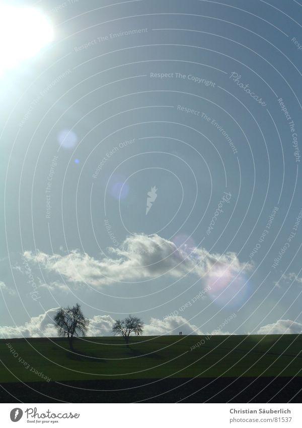Sky Tree Sun Meadow Field To go for a walk Sunday