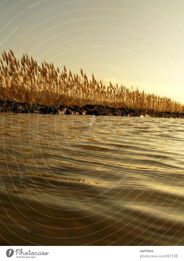 Nature Water Sky Sun Calm Relaxation Autumn Meadow Grass Waves Wind Weather Environment Gold To go for a walk