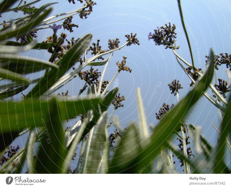 High up 1 Flower Green Tall Worm's-eye view Blossom Grass Summer June Sky Blue Blue sky