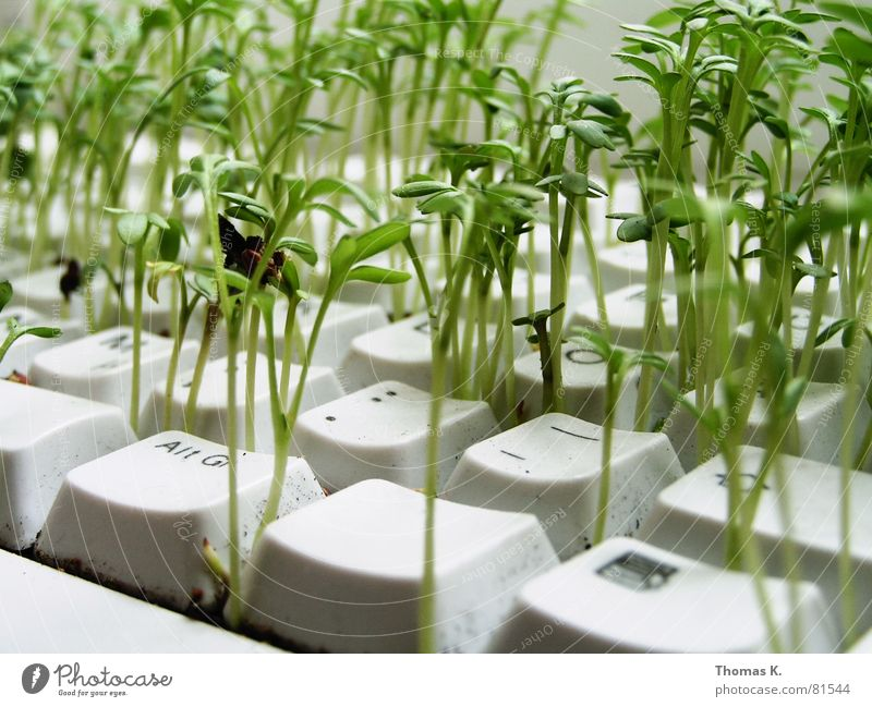 Plant Work and employment Business Computer Agriculture Information Technology Keyboard Ecological Seed Environmental protection Hardware Renewable energy Office work Electrical equipment Symbiosis Cress