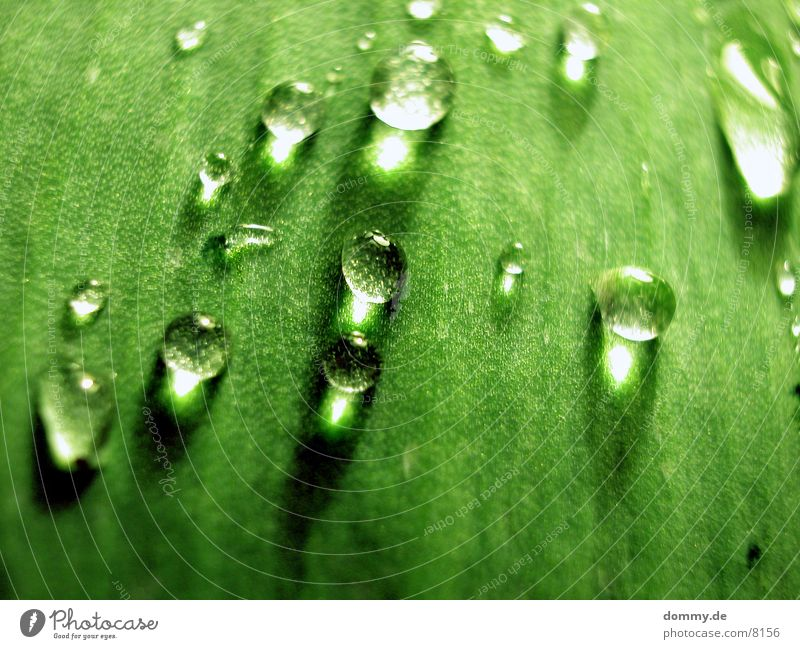 Nature Beautiful Green Water Leaf Near