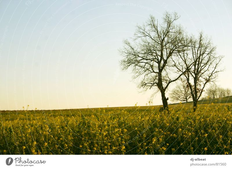 a tree Tree Wood Field Canola Dreary Yellow Exterior shot Sky Landscape Cover