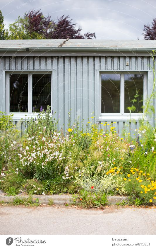 flower power. Flat (apartment) Garden Gardening Environment Nature Plant Weather Beautiful weather Flower Blossom Wild plant Park Meadow Hut Places