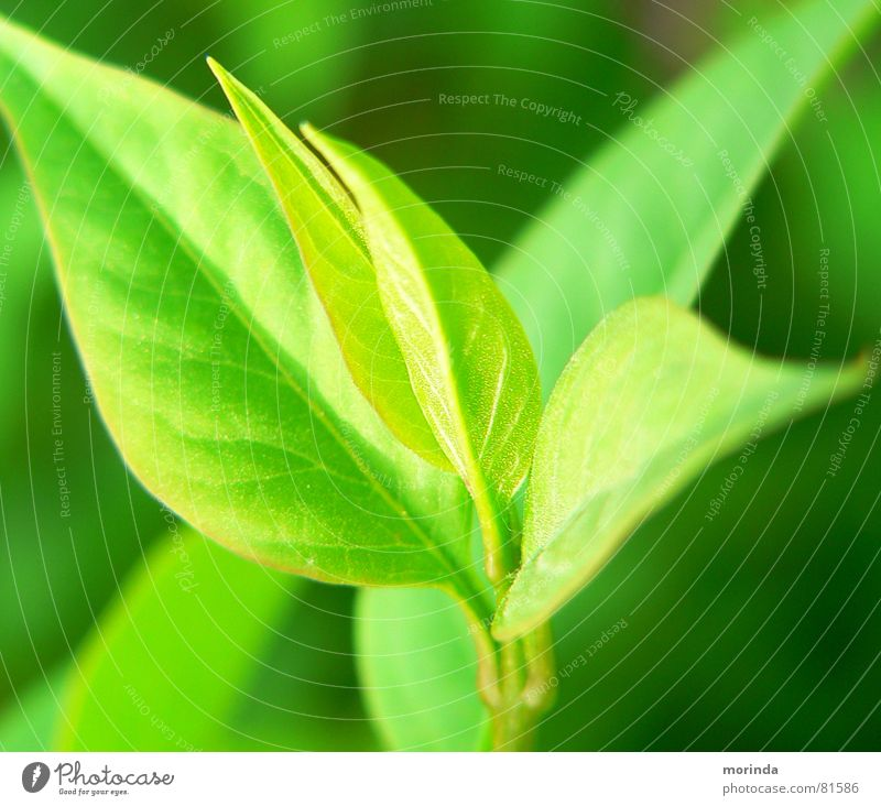 regrowth Leaf Moody Light Summer Plant Spring Green Part of the plant Botany Shoot Plantlet Calm offshoot