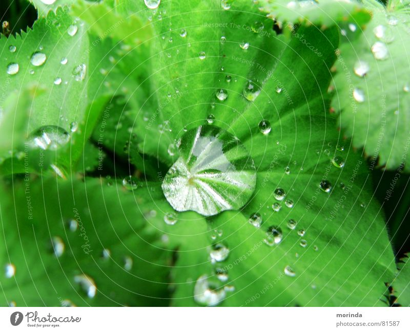 Nature Water Green Plant Summer Leaf Spring Park Rain Drops of water Wet Fresh Round Clarity Dew