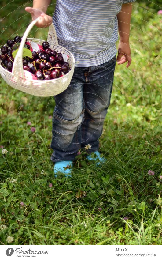 small basket Food Fruit Nutrition Picnic Organic produce Bowl Healthy Eating Garden Human being Toddler 1 1 - 3 years 3 - 8 years Child Infancy Summer Meadow