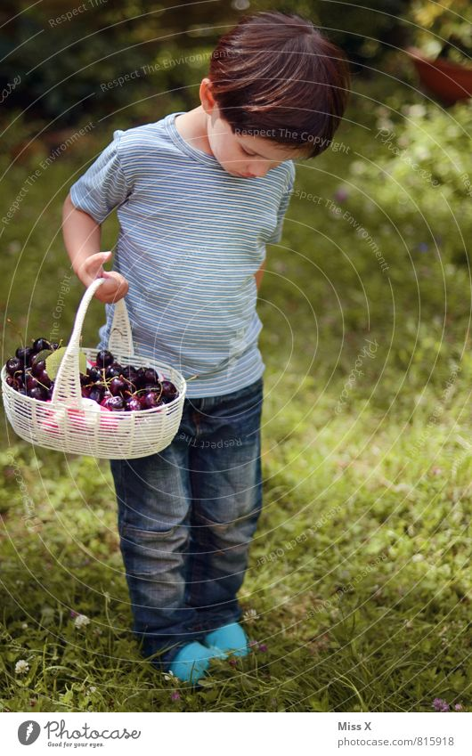 cherry platter Food Fruit Nutrition Picnic Organic produce Playing Garden Human being Child Toddler Infancy 1 1 - 3 years 3 - 8 years Summer Brunette Fresh