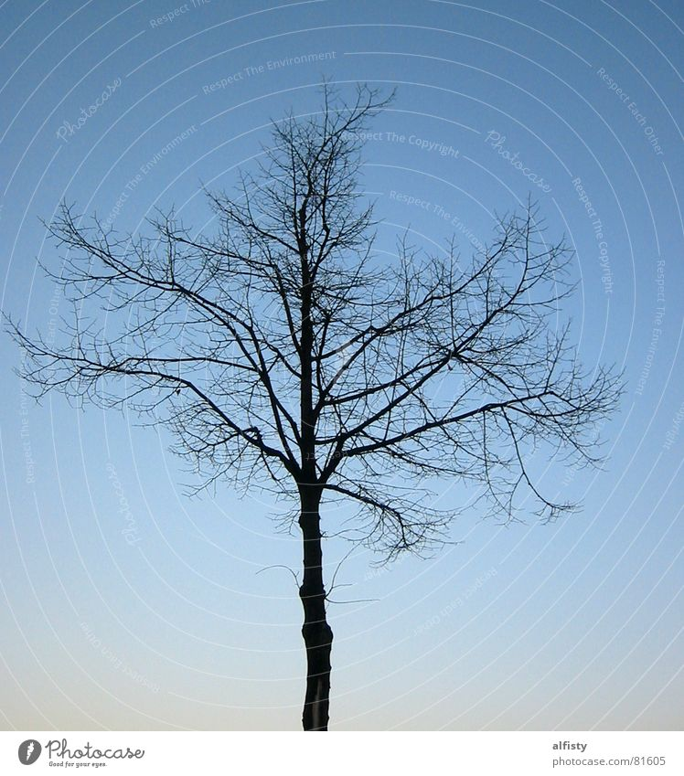 Sky Tree Blue Winter Leaf Autumn Branch Tree trunk Branchage Tree structure