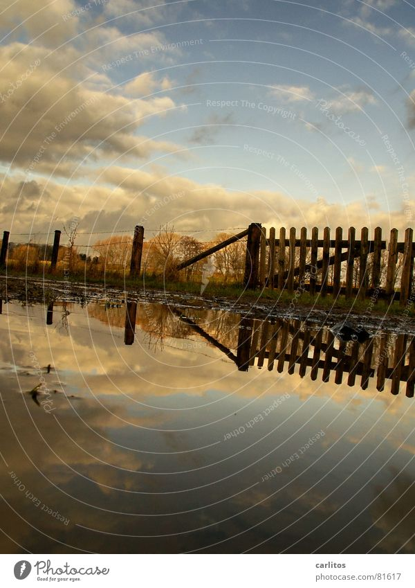 man, that's cow. Barbed wire Fold Horizon Fence Meadow Footpath Puddle Reflection Clouds Dramatic Wind Passion Middle Symmetry White balance 2 Beautiful Border