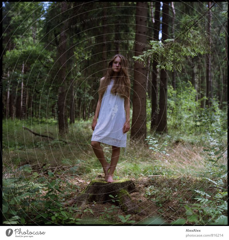 blunting Trip Adventure Young woman Youth (Young adults) 18 - 30 years Adults Tree Grass Tree stump Forest Clearing Dress Barefoot Brunette Long-haired Platform
