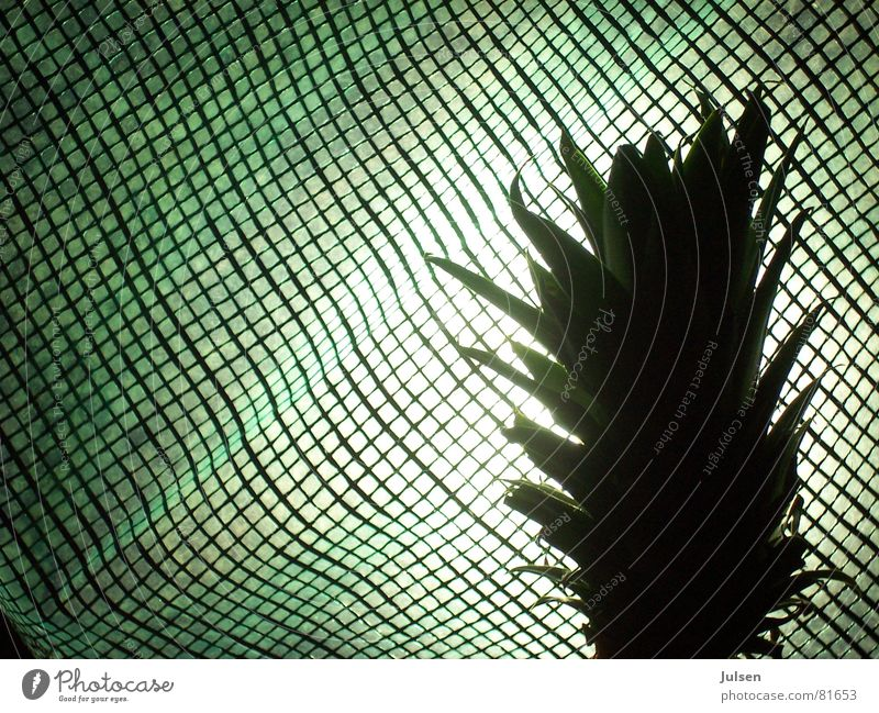 Green Colour Fruit Net Grid Checkered Covers (Construction) Shock of hair Pineapple