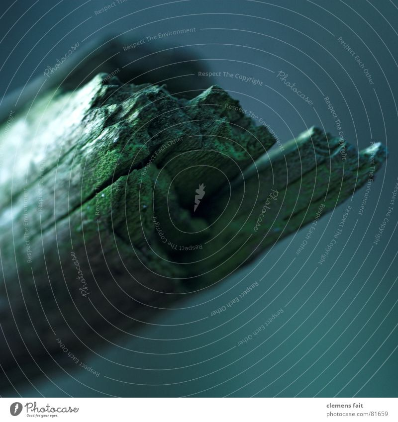 blunt Deep Green Dark Mystic Wood Splinter Transience aborted Simple Blue Old