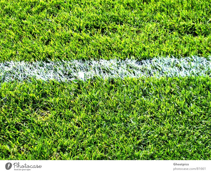 White-Stripe on green Leisure and hobbies Playing Foot ball Football pitch Summer Sports Soccer Sporting Complex Stadium Plant Grass Garden Park Meadow Field