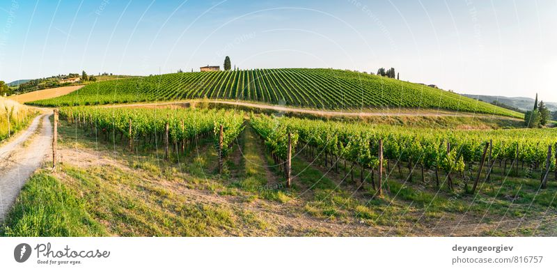 Vineyards in Tuscany. Farm house Sky Nature Vacation & Travel Plant Green Summer Sun Tree Landscape House (Residential Structure) Street Autumn Horizon Growth