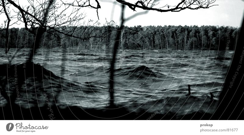 Water Tree Forest Lanes & trails Lake Rain Waves Fear Weather Electricity Dangerous River Level Threat Climate Branch