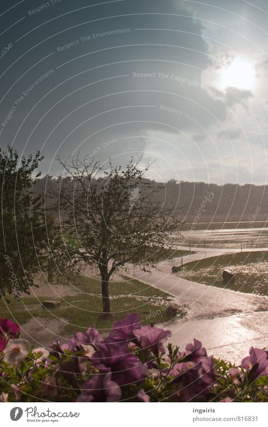 downpour Nature Landscape Animal Water Drops of water Sky Storm clouds Sun Sunlight Summer Climate Weather Bad weather Rain Thunder and lightning Tree Flower