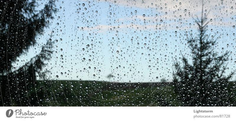 Sky Tree Meadow Window Grass Sadness Rain Glass Drops of water Grief Fir tree Distress Depth of field Concern Droop Thundery shower
