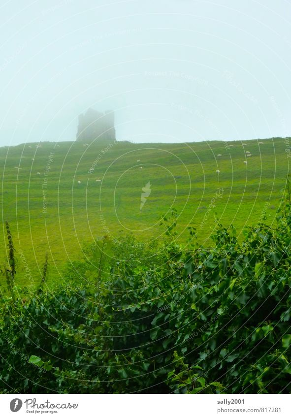 Nature Old Green Summer Loneliness Calm Landscape Far-off places Dark Meadow Grass Park Weather Field Fog Idyll