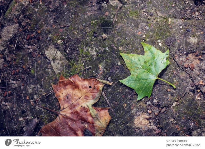 #LO Flat leaf Art Esthetic Contentment Leaf Ground Green Contrast Autumnal Autumn leaves Early fall Autumnal colours Autumnal weather Automn wood Autumn wind